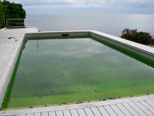 groene algen zwembad