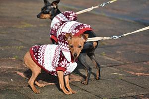 hondenkleren