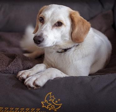 Hondenmanden & Kussens